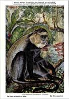 Le Singe Argenté - Belgique - Muséum Des Sciences Naturelles (Illustrateur L. Henderycky) (Recto-Verso) - Singes