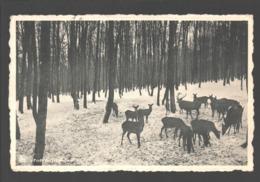 Transinne - Forêt De Transinne - éd. Hôtel De La Barrière - Cerf / Deer - Libin