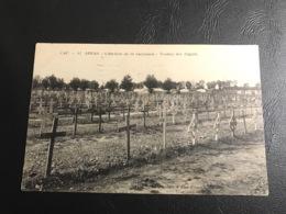 42 - ARRAS Cimetiere Du St Sacrement - Tombes Des Anglais - 1920 Timbrée - War 1914-18