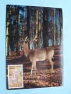 Cerf - Edelhirsch - Red Deer ( 307-5 Deriaz ) L'ESSOR Bordeaux Anno 1972 Sologne ( Zie/voir Foto's Voor Details ) - Maximumkaarten