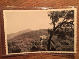 PHOTO, Carte Photo, TUNISIE, AÏN DRAHAM? écrite En 1950 - Tunisia