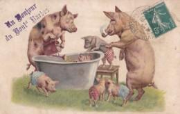 COCHONS LOT 2 CPA - Schweine