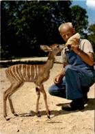 Zoologischer Garten Basel - Kleiner Kudu (502) * 25. 5. 1978 - BS Bâle-Ville