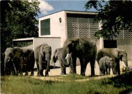 Zoologischer Garten Basel - Afrikanische Elefanten * 25. 7. 1968 - BS Bâle-Ville