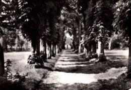"""CPSM - VALENTON - """"Les Charmilles"""" - Allée Centrale .... - Valenton"""