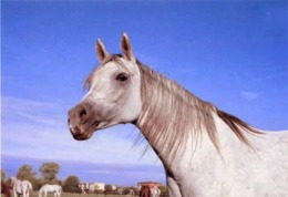 Animals, Horses, Pferde, Konie, Cheval, Cavalli, Poland, - Caballos