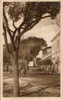 (C).Monterotondo Marittimo(GR).Viale Dei Pini.F.to Piccolo.Ottimo Stato (c16) - Grosseto