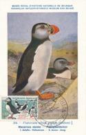 D38053 CARTE MAXIMUM CARD 1960 FRANCE - MACAREUX MOINE CP MUSEUM ORIGINAL - Altri