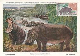 D38054 CARTE MAXIMUM CARD 1963 CAMEROUN - HIPPO HIPPOPOTAMUS - 5 FRANCS - CP MUSEUM ORIGINAL - Timbres