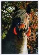Animals, Horse, Pferde, Poland - Cavalli