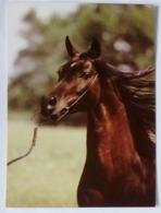 Animals, Horse, Pferde, Poland - Caballos