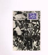 Carte Maximum.Le Café. - A.E.F. (1936-1958)