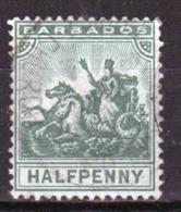 Barbados 1905 Badge Of The Colony Single Half Penny Stamp. - Barbados (...-1966)
