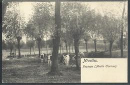 CPA Nivelles Paysage ( Moulin Clarisse )  Nels Série 76 N°24 - Beringen