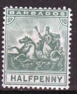 Barbados 1892 Seal Of The Colony Single One Half Penny Stamp. - Barbados (...-1966)
