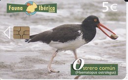 NOVEDAD! TARJETA DE FAUNA IBERICA OSTRERO COMUN TIRADA 65010  (BIRD-PAJARO) - Spanje