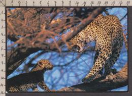 89848GF/ FAUNE D'AFRIQUE, Léopard Et Jeune, Kenya, Réserve Nationale De Samburu - Animali