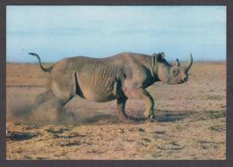89814/ RHINOCEROS - Rinoceronte