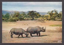 89815/ RHINOCEROS - Rhinozeros