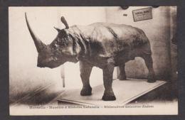78587/ RHINOCEROS, Rhinocéros Unicorne (Indes), Marseille, Museum D'Histoire Naturelle - Rhinozeros