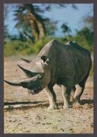 89816/ RHINOCEROS - Rhinozeros