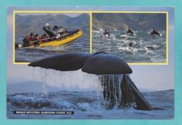 NEW ZEALAND WHALE SPOTTING KAIKOURA COAST 1994 - Nuova Zelanda