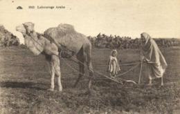 Labourage Arabe RV - Cultures
