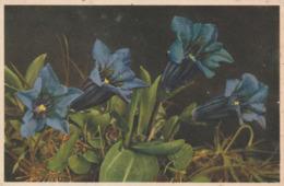 Carte Postale Ancienne Avec Des Fleurs - Gentiana Acaulis - édition Suisse - Fleurs