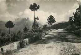 20 - Bavella - Col De Bavella - Voir Timbre Marianne De Gandon - Etat Trou De Punaise Visible - Voir Scans Recto-Verso - Francia