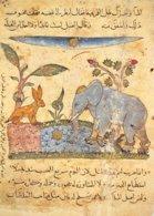 B-19-912 : ELEPHANT. - Elephants