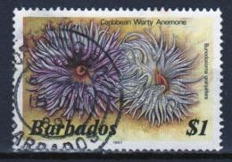 Barbados Single $1 Stamp From The 1985 Marine Life Series. - Barbados (1966-...)