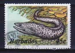 Barbados Single 45c Stamp From The 1985 Marine Life Series. - Barbados (1966-...)
