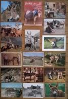 Lot De 17 Cartes Postales / ANES / ânes - Donkeys