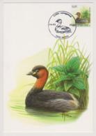 Maxikaart Buzin - Cob N° 3993 - Dodaars - Grèbe Castagneux -  1ste Dagstempel - 1985-.. Vögel (Buzin)