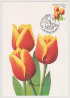 Maxikaart Buzin - Cob N° 2907a (2000) - Tulp - Tulipe -  1ste Dagstempel - 1985-.. Birds (Buzin)