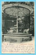 Pumakäfig - Zoolog. Garten Basel 1903 - BS Bâle-Ville