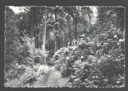 Attre - Château D'Attre - L'Allée Des Rhododendrons - Nels Bromurite - Brugelette