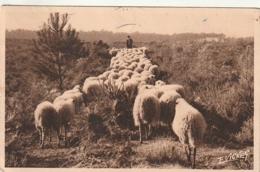 *** 40  ***  LANDES  - Moutons En Hiver élevage - TTB  Timbrée - Unclassified
