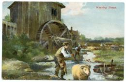 WASHING SHEEP / SHEEP DIP - Breeding
