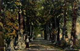 1907 SUDAFRICA , TARJETA POSTAL CIRCULADA , WELLINGTON AVENUE - WYNBERG - Sudáfrica