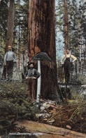 Logging Lumber Cut Sawyers Oregon 1907 Postcard - Autres