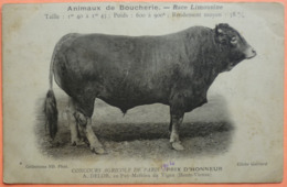 CARTE CONCOURS AGRICOLE PARIS 1904 - ANIMAUX BOUCHERIE RACE LIMOUSINE - PUY MATHIEU DU VIGEN 87 - SCAN RECTO/VERSO-13 - France