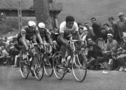 7178 Photo Repro. Cyclisme Bitossi, Campaner, Bellone - Ciclismo