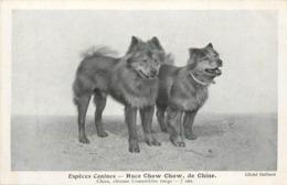 ESPÈCES CANINES - Race Chow Chow, De Chine. - Hunde