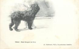 CHIEN - Race Berger De Brie. - Hunde