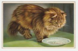 Beau Chat Devant Son Assiette Printed In Belgium - Katten