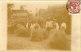 LADAPEYRE  -  CARTE-PHOTO Des  Moissons à Ce Village De 1600 Habitants - Localisée Grâce Au Texte - Francia