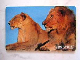 ANIMAL TANZANIA  LIONS - Tanzanie