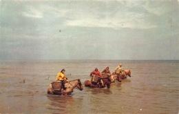 Koksijde  Coxyde Garnaarvissers Te Paard Boerenpaard  L 1260 - Koksijde