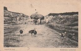 *** RUMANISCHE LANDSCHAFT Vedere La Tara - Voyagé TTB - Roumanie